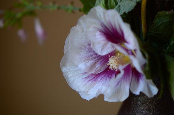 small sunny garden, desert garden, amy myers, photography, garden photography, garden blog, monday vase, in a vase on monday, iavom