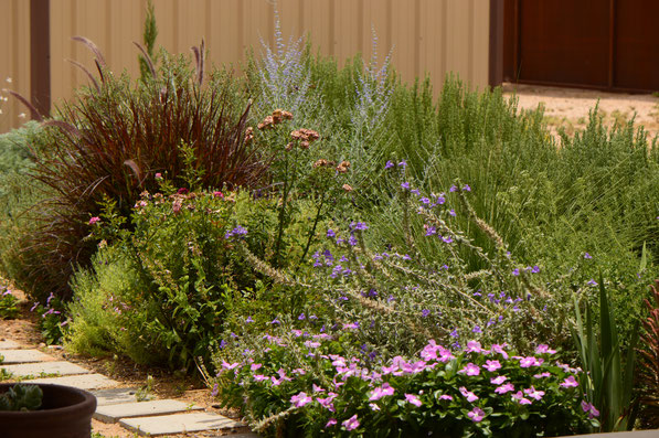 small sunny garden, desert garden, amy myers, photography, garden photography, tuesday view