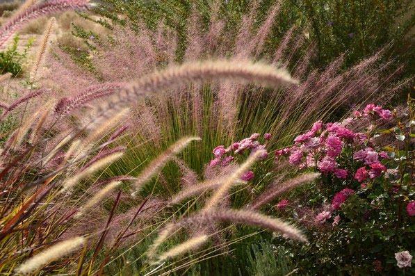 Sunlight, ornamental grasses and miniature roses