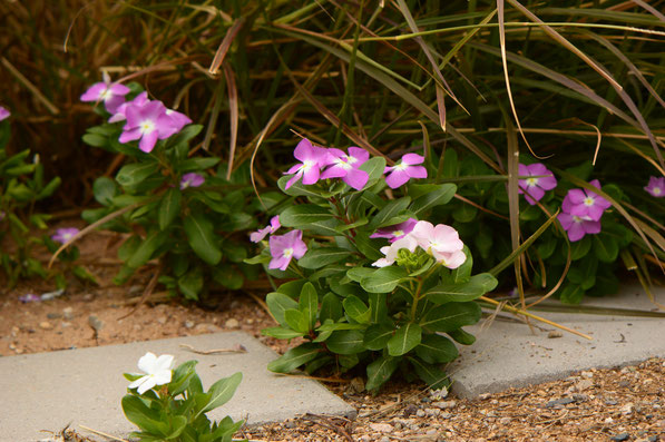 small sunny garden, desert garden, amy myers, photography, garden blog, summer