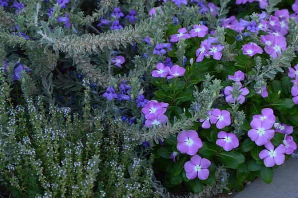 small sunny garden, desert garden, garden blog, amy myers