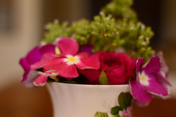 small sunny garden, desert garden, amy myers, photography, garden photography, monday vase, in a vase on monday, iavom,