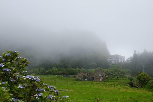 Hortensien, Nebel grüne Wiesen, alte Steinhäuser auf Sao Miguel, Azoren