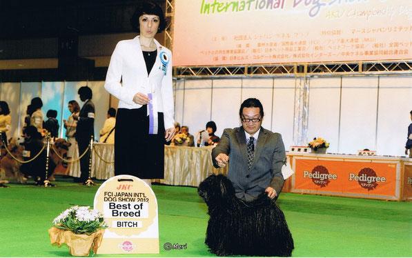 カルーア:FCIジャパンインターナショナルドッグショー2012BOB