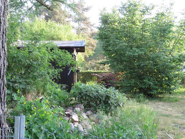 Haselstrauch im Garten