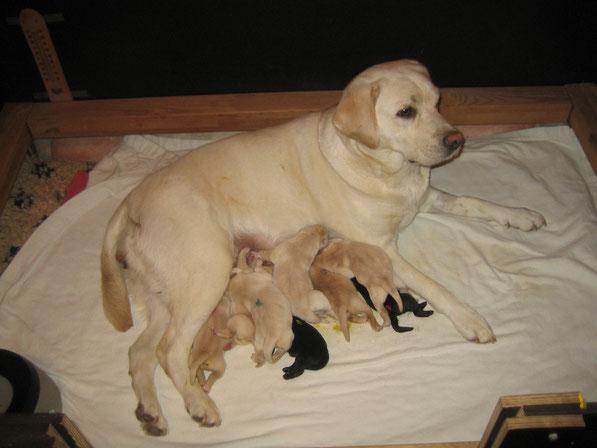 C-Wurf gleich nach der Geburt