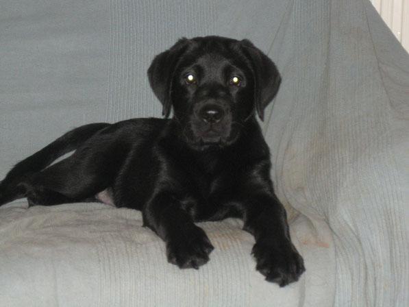 Bronté mit 11 Wochen - 25.12.2009