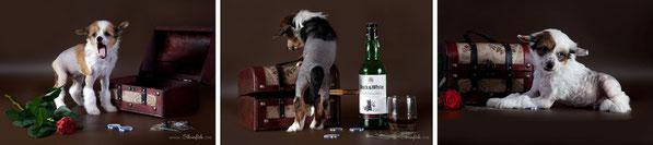 Продажа щенков китайской хохлатой, питомник Украина, Одесса