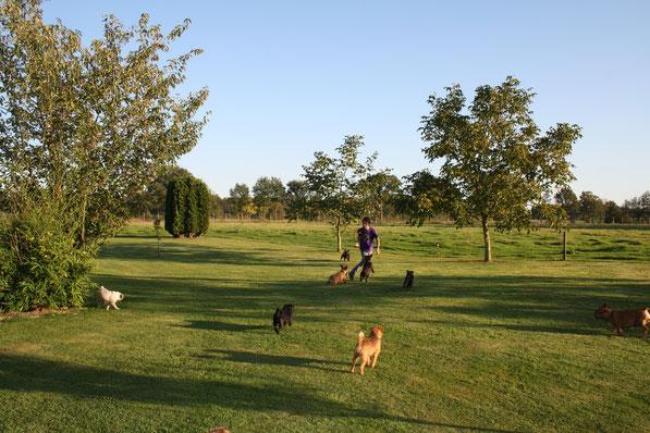 Fang-und Ballspiele auf unserem riesigen Grundstück!
