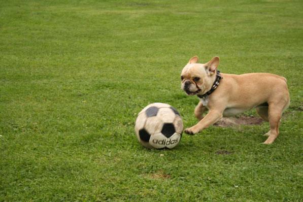 Unsere Greta beim Fußballtraining!