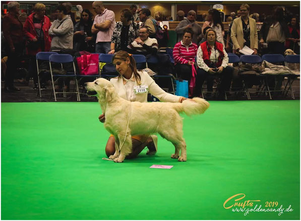 VHC  Crufts 2019 ,Puppy Class