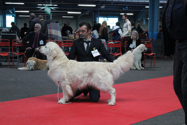 CACIB 1er exc classe Champion Butterfl'Highland Give me the Moon