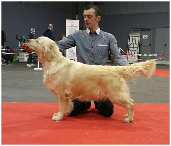 Ch.Butterfl'Highland Light the Show 1ere exc classe champion RCACIB