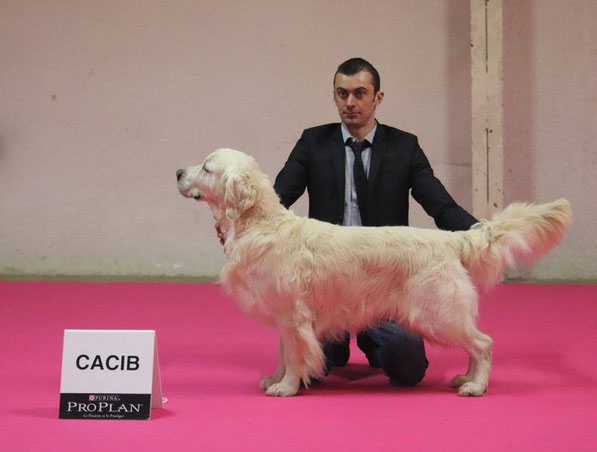 CIE Butterfl'Highland Give me the Moon , 1er exc classe champion ,CACIB