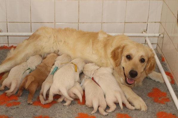 Maman adoptive,Paillette !