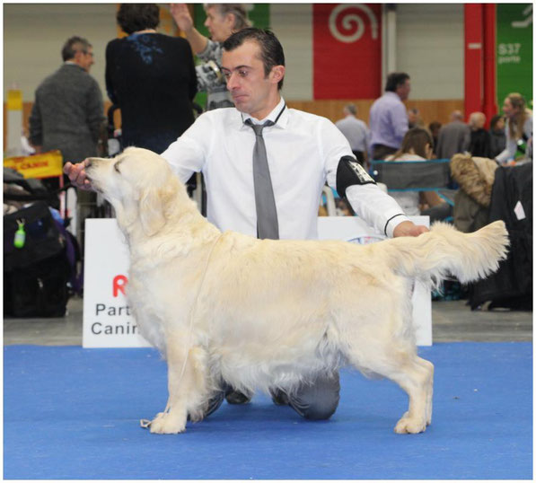 CH.Butterfl'Highland Glossy Moon , 1ere Exc Classe Champion