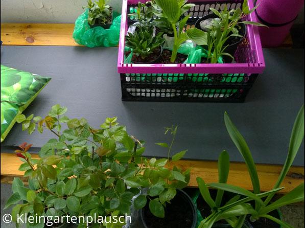 Diverse gekaufte  Pflanzen in Töpfen und Tüten und pinker Kiste in unserer Hütte
