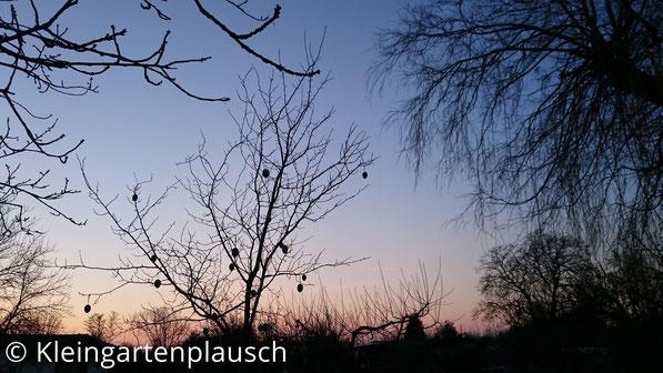 ... bis es irgendwann spät ist und die Abensonne den Pflaumen- und Ostereierbaum anstrahlt. Gute Nacht :-)