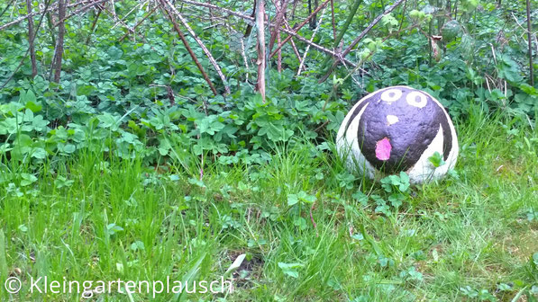 Steinschaf auf Rasen mit Giersch und Hasendrahtzaun vom Nachbarn