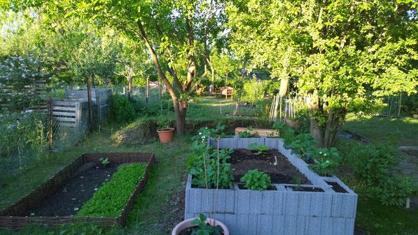 Blick in den Garten, links ein Bodenbeet mit kleinen Weidenzäunchen, rechts Hochbeet aus grauen Pflanzsteinen