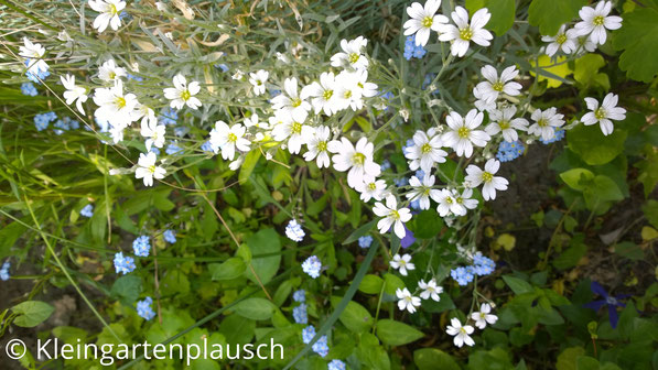 Weiße zarte Blüten mit gelbem Inneren