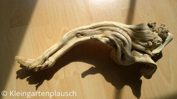 Gereinigtes und poliertes Wurzelstück auf Buchenholztisch