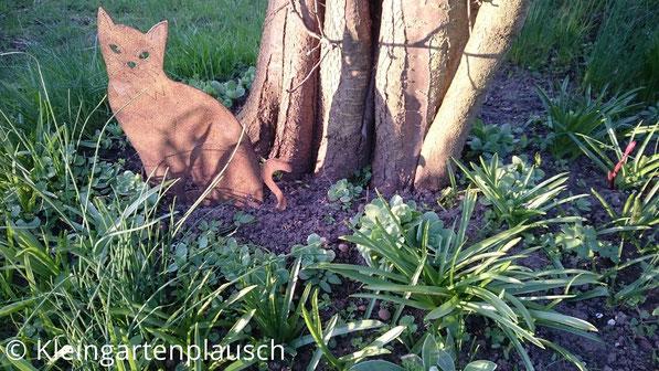 Eine Rost-Dekokatze zu Füßen der Kirschpflaume, rundherum wächst Sedum, darum wiederum Muscari und Krokusse, darum wiederum Schnittlauch - alles selbstangesiedelt...