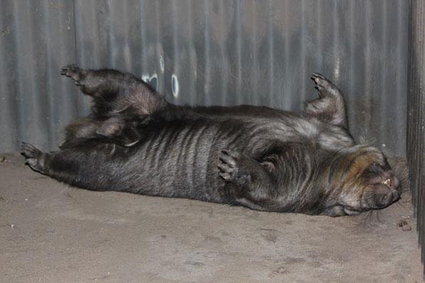 Das ist ein Wombat