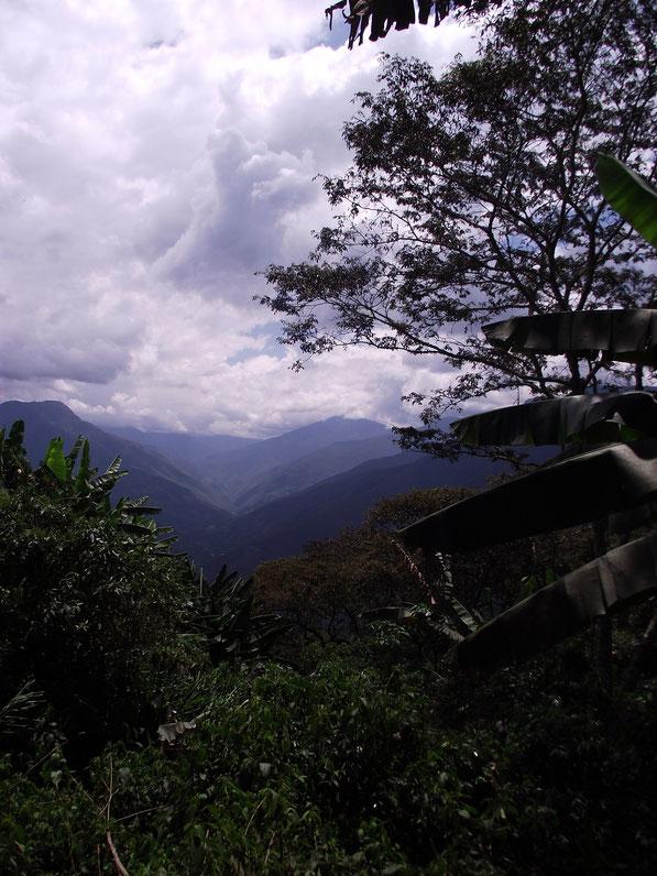 Coiroco, Yungas, Bolivia