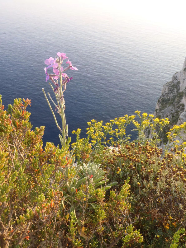 Flowers, Gozo, Malta