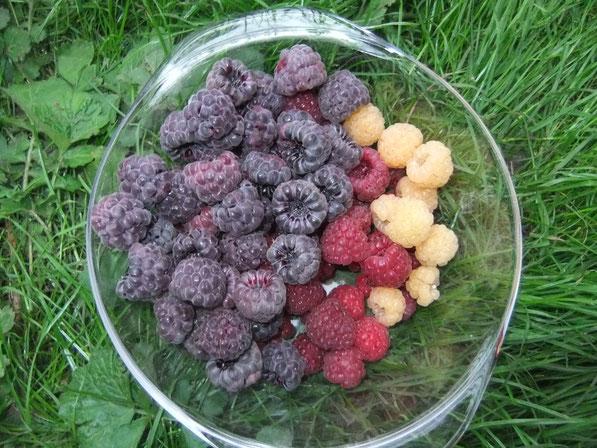 rote, gelbe und violette Früchte