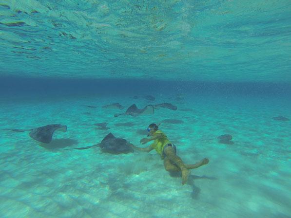 Schnorcheln auf den Caiman-Islands - in guter Begleitung.   Mai 2014