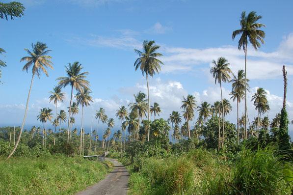Plantagen am Fuß des Mount-Soufriere    ST.VINCENT