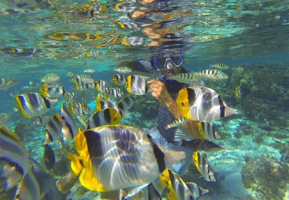 Vor TAHAA inmitten vieler kleiner Pinzettfische,  Mai 2016