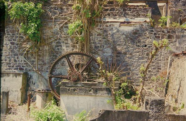 Die alten Fabriken verfallen, Maschienen rosten und die Natur kommt zurück.