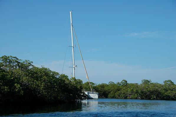Irgendwo im Nirgendwo:  In den Mangroven von Cayo Anclitis, Jardines de la Reina, CUBA