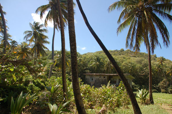 Verlassene Cocosplantage in der Hope-Bay