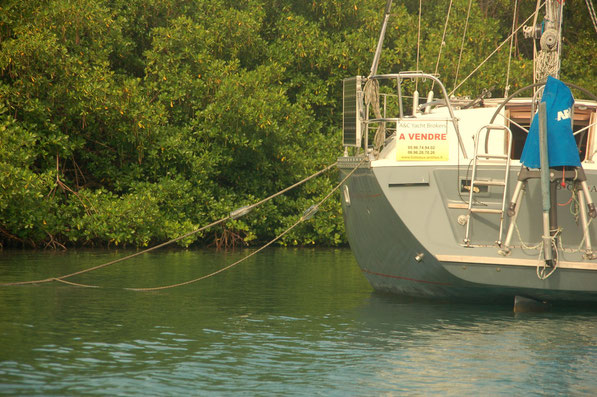 Alles sturmsicher verstaut und verzurrt liegt die BONA nun in den Mangroven.