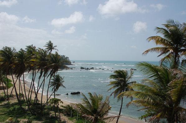 Das Landesinnere sowie auch die Nord- und Ostküsten Trinidads haben uns sehr gefallen.