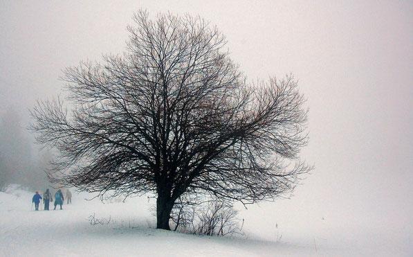 Promenade en hiver.