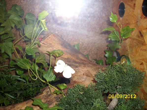Eine fliegende Vitamintablette erkundet die Umgebung. Leckere abwechslungsreiche Nahrung für die Skorpione.