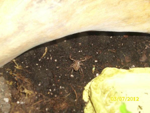 Erste Erkundungsversuche des kleinen Würmchens. Die Kleinen sind jetzt seit ein paar Tagen vom Rücken der Mutter runter.