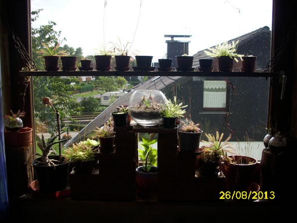 Nochmal ein Panoramablick über das gesamte Fenster an einem sonnigeren Tag.