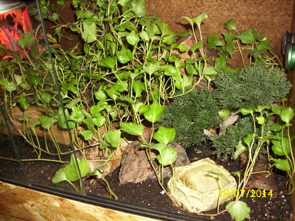 Auch im neuen Jahr grünt es im Terrarium. Der Farn ist inzwischen leider eingegangen und hat Platz für eine weitere Aströhre gemacht. Die Rankenpflanzen haben mittlerweile einen richtigen Dschungel gebildet.