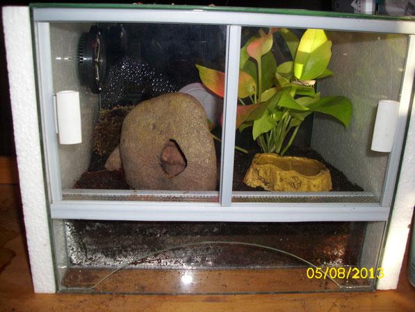 Nochmal ein Blick von vorne auf das neue kleine Glas-Terrarium. Hinten links befindet sich die Rindenhöhle und auf dem Blatt der Pflanze erkennt man das heute Fütterungstag war.