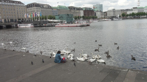 cygnes sur l'Innenalster