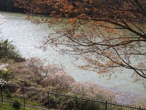 阿武隈川蓬莱ダム上流