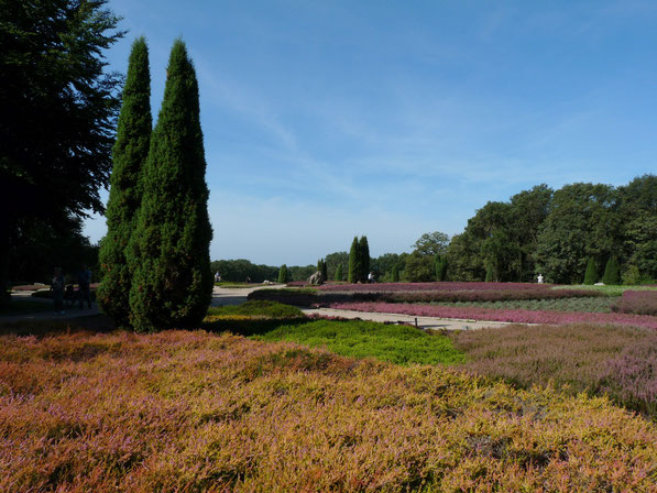 Heidegarten in Höpen ( Schneverdingen )
