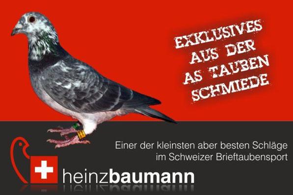 Die Ass - Taubenschmiede der Schweiz - Brieftaubensport auf höchstem Spitzen-Niveau