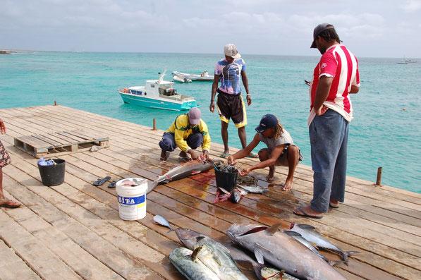 Die gefangenen Fische sind fast so groß wie die Boote. Nur wenige Boote haben einen Motor.